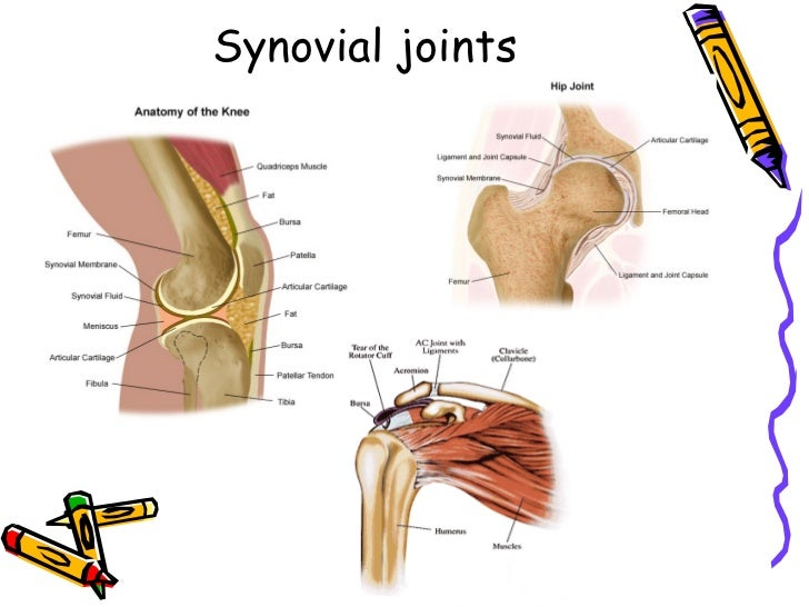 an analysis of the musculoskeletal system Muscular system muscular  skeletal muscle: this type of muscle creates movement in the body there are more than 600 skeletal muscles, and they makes up about 40 percent of a person's body .