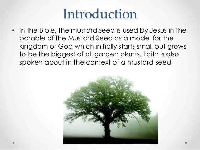 The mustard seed by the church of christ sangotedo - What to do with mustard five unknown uses ...