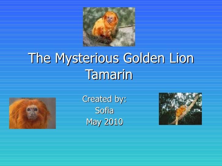 The mysterious golden lion tamarin