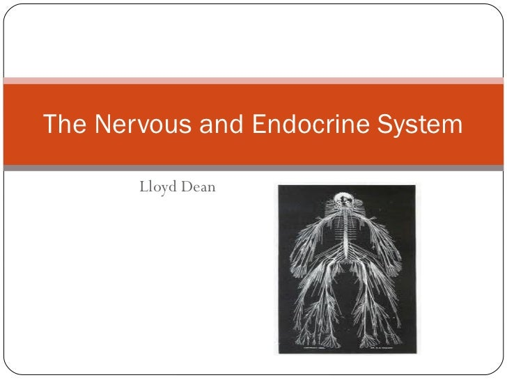 Lloyd Dean The Nervous and Endocrine System