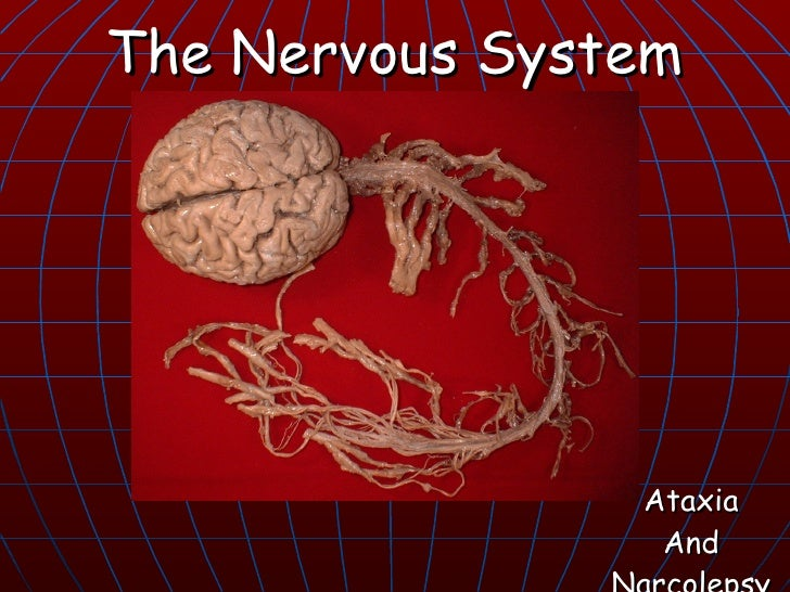 The Nervous System                     Ataxia                  And