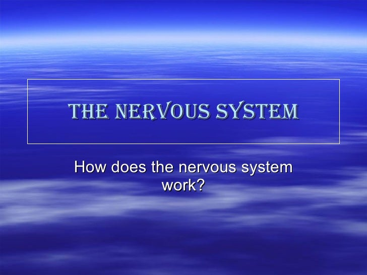 the nervous system How does the nervous system work?