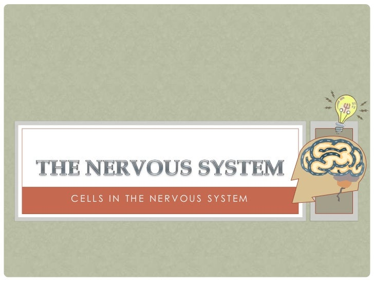 CELLS IN THE NERVOUS SYSTEM