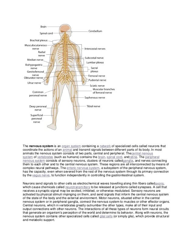 The nervous system is an organ system containing a network of specialized cells called neurons thatcoordinate the actions ...