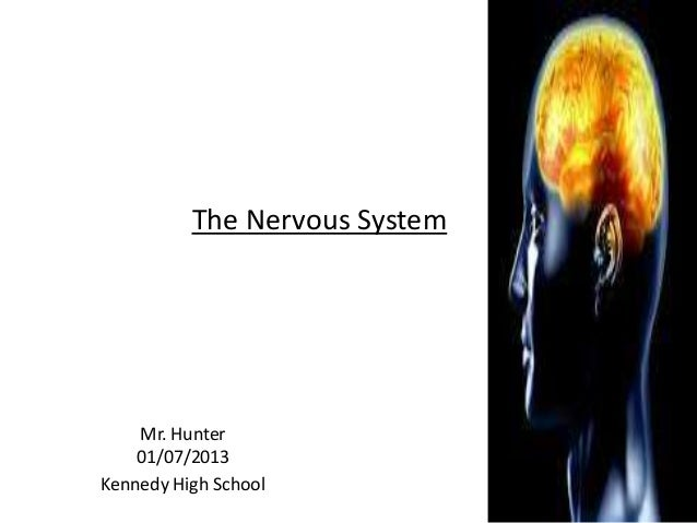 Anatomy and Physiology The Nervous System 01/23/13