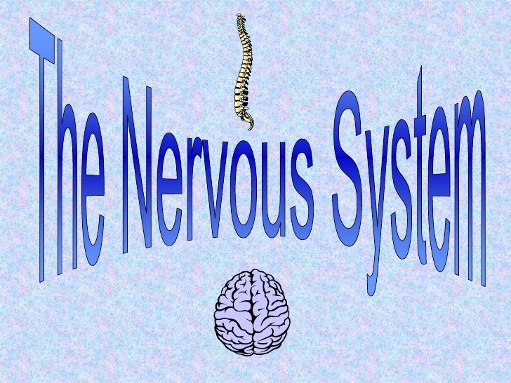 The nervous system[1]