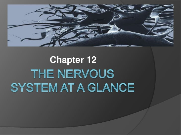 The Nervous System At A Glance