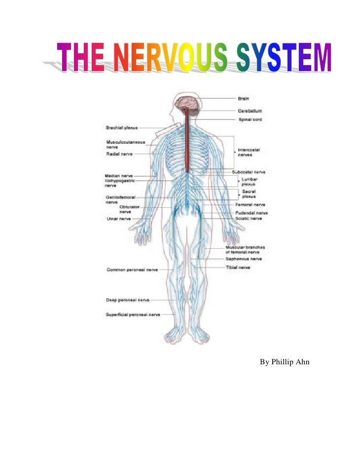The Nervous System Brain Diseases