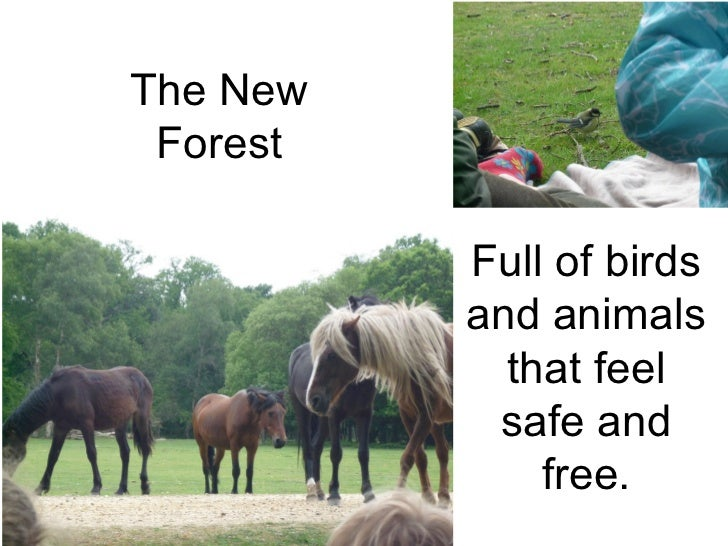 Full of birds and animals that feel safe and free. The New Forest