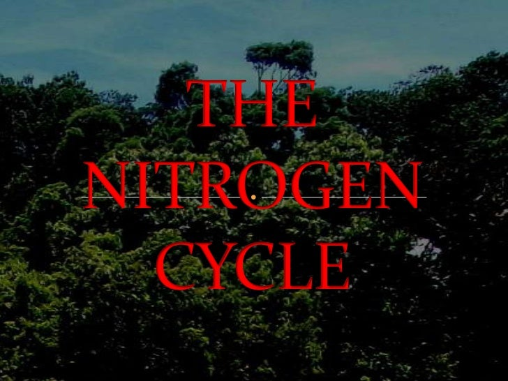 THE NITROGEN CYCLE<br />