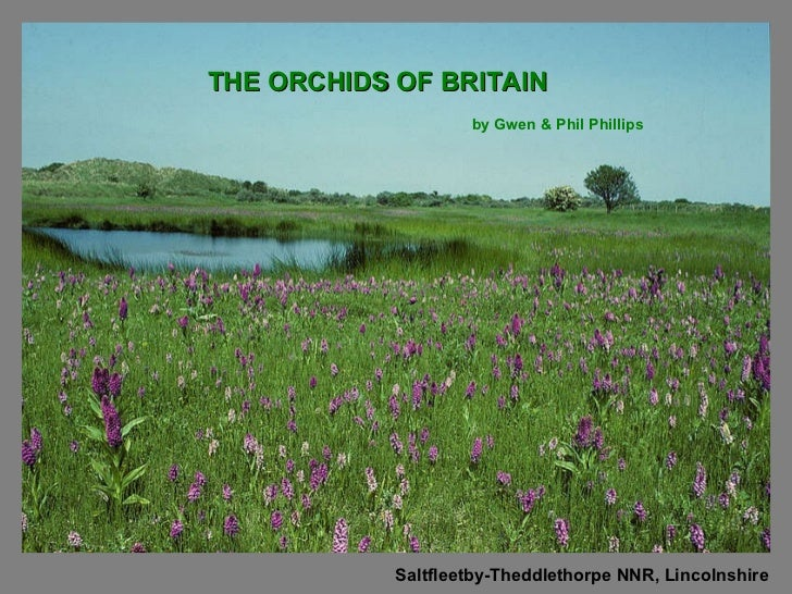 THE   ORCHIDS OF BRITAIN Saltfleetby-Theddlethorpe NNR, Lincolnshire by Gwen & Phil Phillips