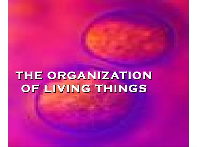 Organization of Living Things Notes