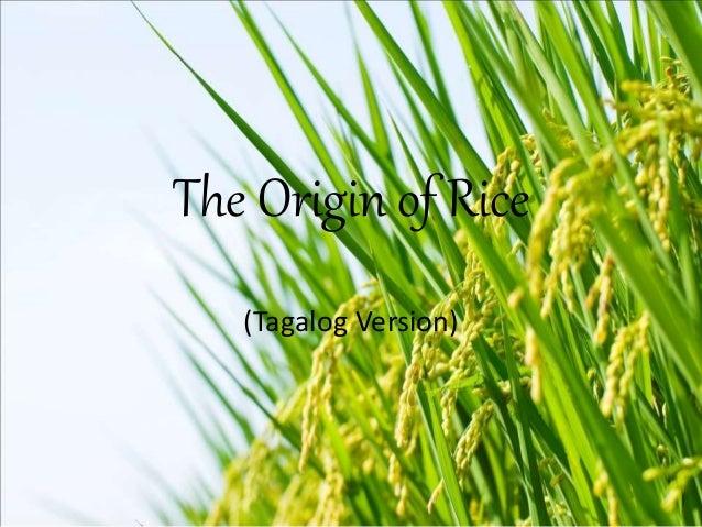 the origin of rice myth ibaloi The origin of rice myth ibaloi version, ang pinagmulan ng rice version alamat ibaloi, , , translation, human translation, automatic translation.