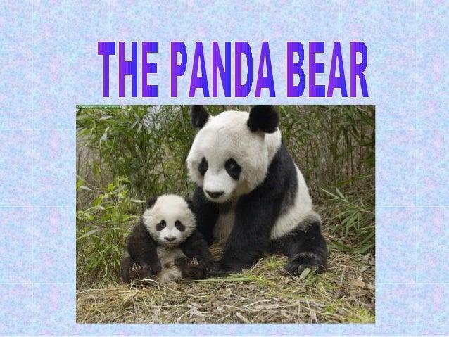 The panda bear is big, fatand very beautiful.