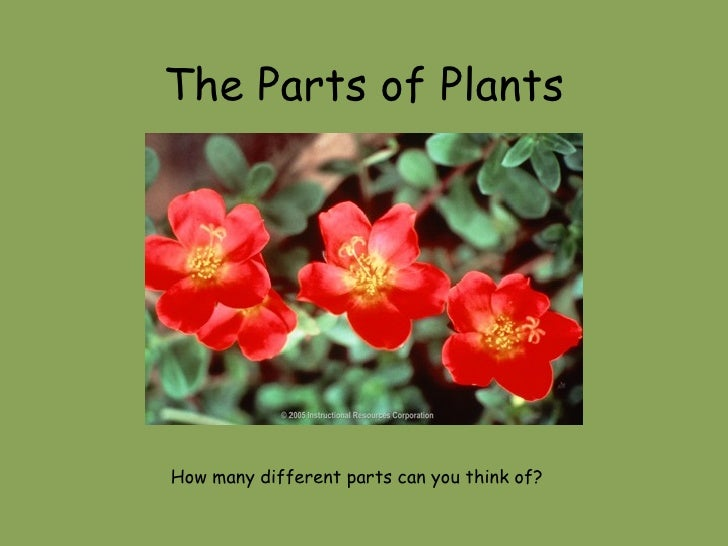 The Parts of Plants How many different parts can you think of?
