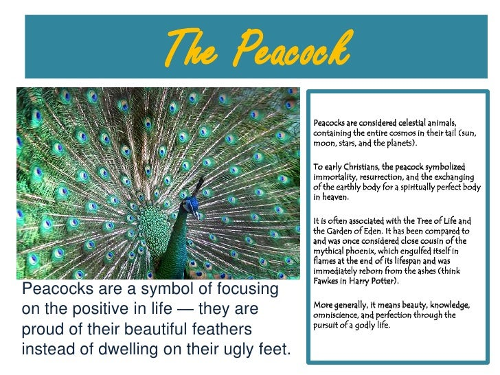 The Peacock<br />Peacocks are considered celestial animals, containing the entire cosmos in their tail (sun, moon, stars, ...