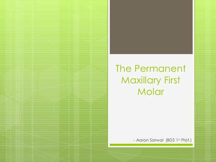 The Permanent Maxillary First     Molar    - Aaron Sarwal (BDS 1st Prof.)
