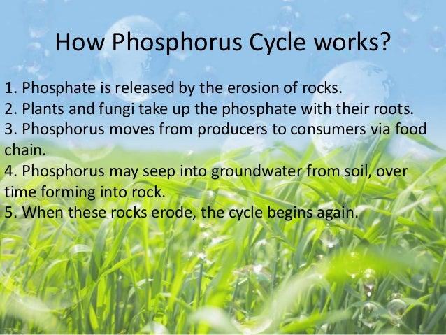 The phosphorus and sulfur cycle