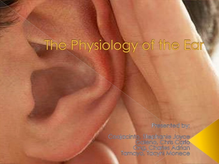    External Ear    › Auricle/ Pinna: Flap of elastic cartilage      shaped like flared end of a trumpet and      covered ...