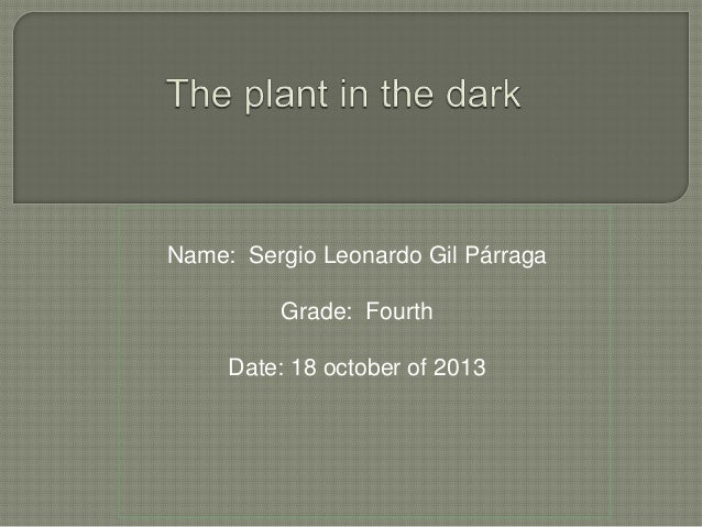 The plant in the dark
