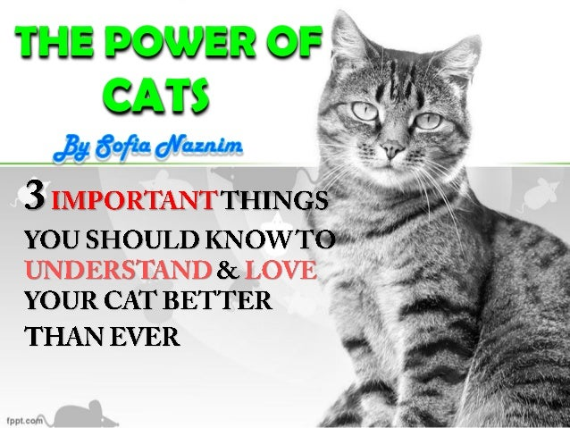 THE POWER OF CATS
