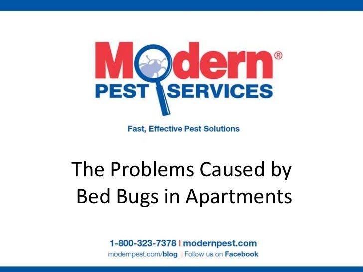 The Problems Caused by Bed Bugs in Apartments<br />