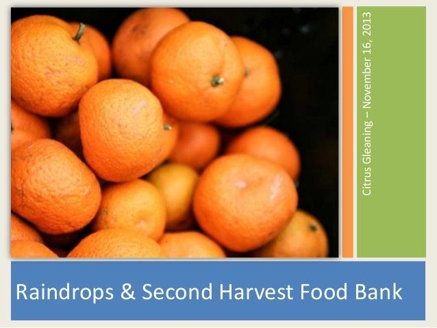 Citrus Gleaning – November 16, 2013  Raindrops & Second Harvest Food Bank