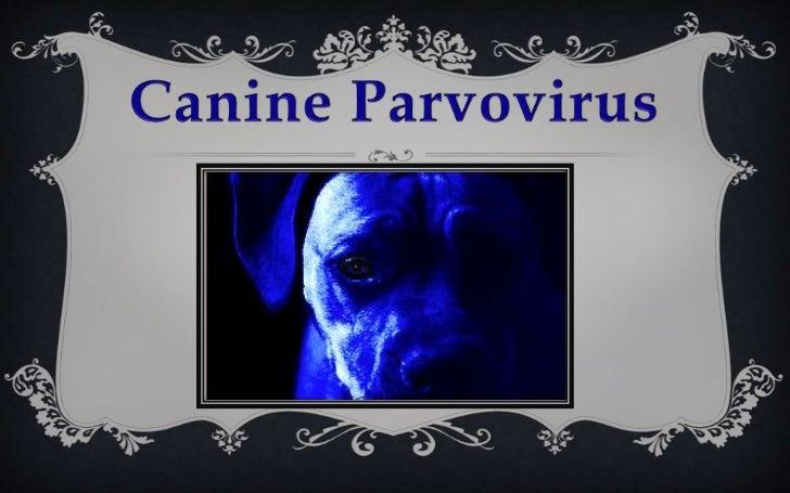 CanineParvovirus<br />