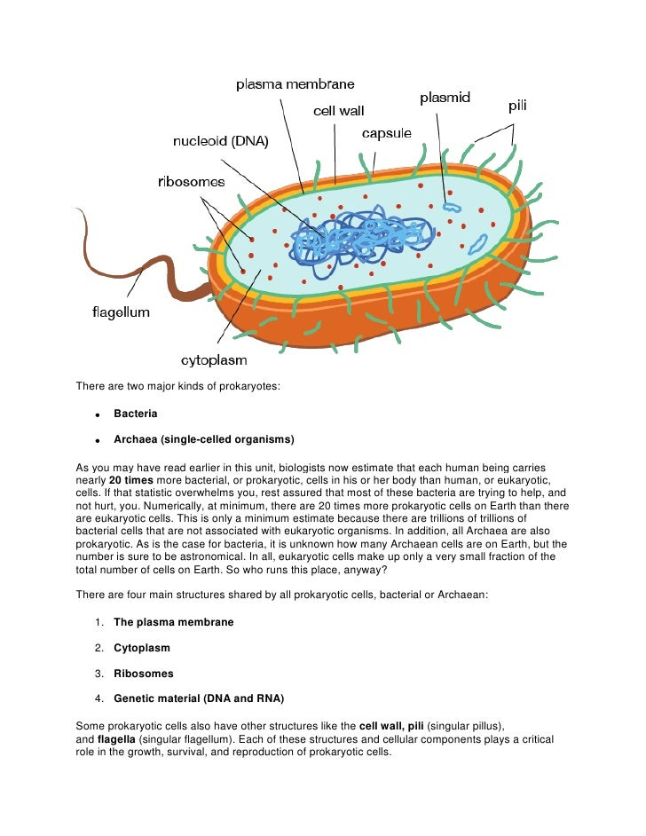 There are two major kinds of prokaryotes:        Bacteria        Archaea (single-celled organisms)As you may have read ear...
