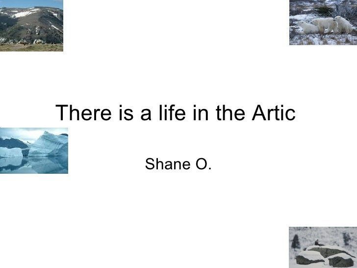 There is a life in the Artic  Shane O.