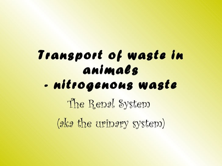 Transport of waste in animals - nitrogenous waste The Renal System  (aka the urinary system)