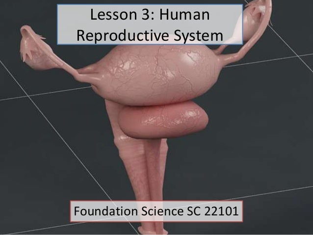 Lesson 3: Human Reproductive System Foundation Science SC 22101