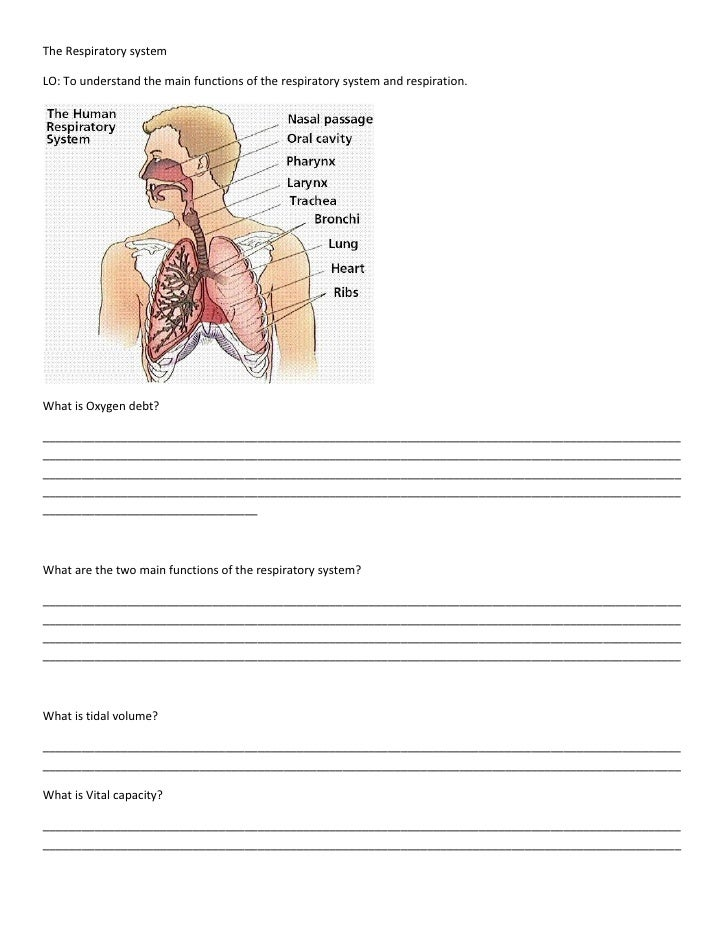The respiratory system worksheet 1.