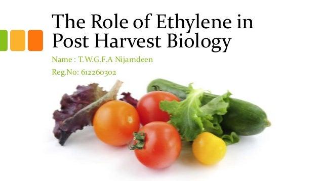 The Role of Ethylene inPost Harvest BiologyName : T.W.G.F.A NijamdeenReg.No: 612260302