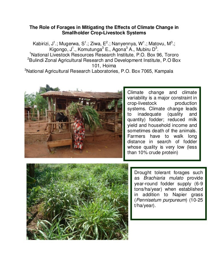 The Role of Forages in Mitigating the Effects of Climate Change in                Smallholder Crop-Livestock Systems      ...