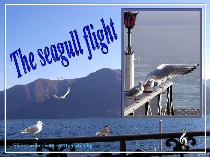 The seagull flight Slides will advance automatically
