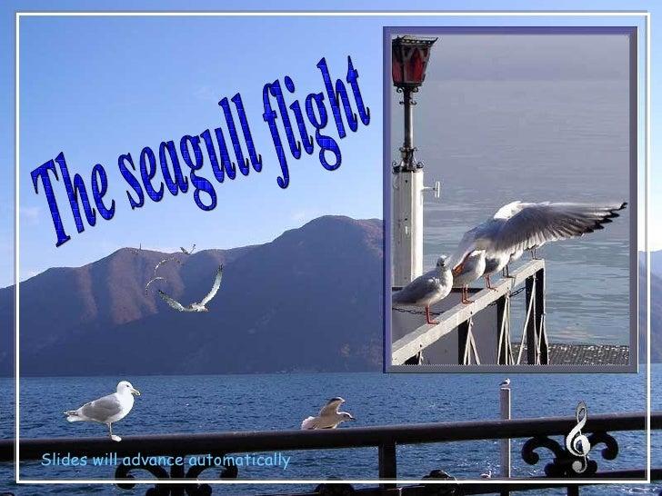The Seagull Flight - Charlotte2