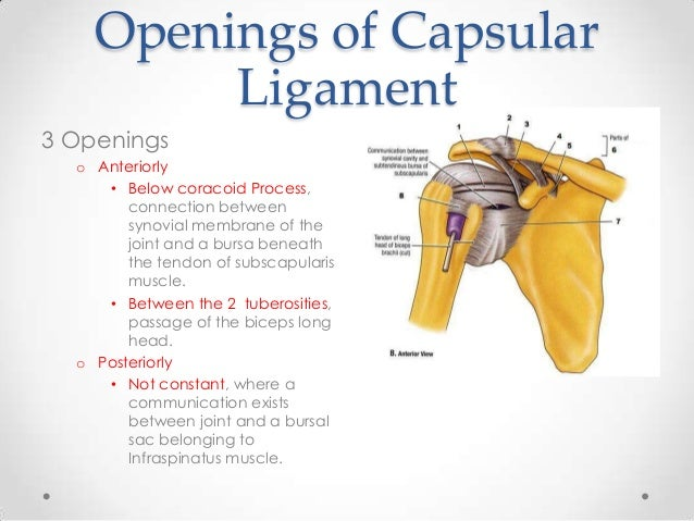 How to Strengthen Ligaments