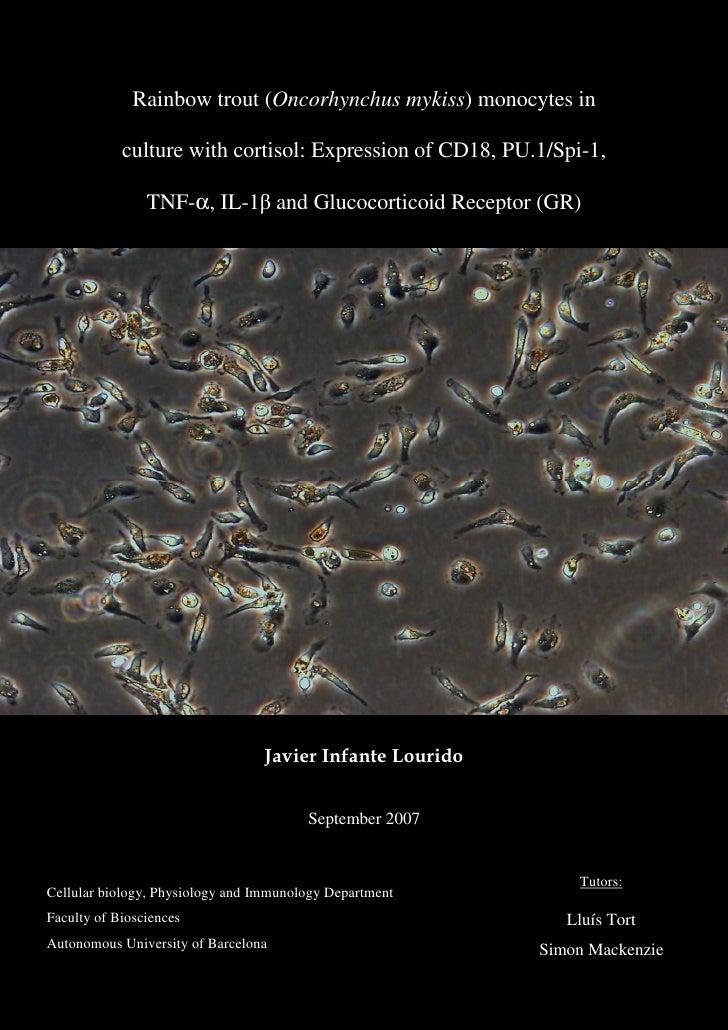 Thesis Javier Infante Lourido