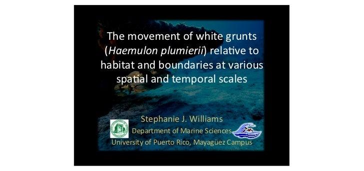 The movement of white grunts  (Haemulon plumierii) rela5ve to habitat and boundaries at various...