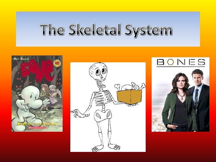 Radius                      Skull                    Femur (thigh bone)                       Shoulder joint              ...