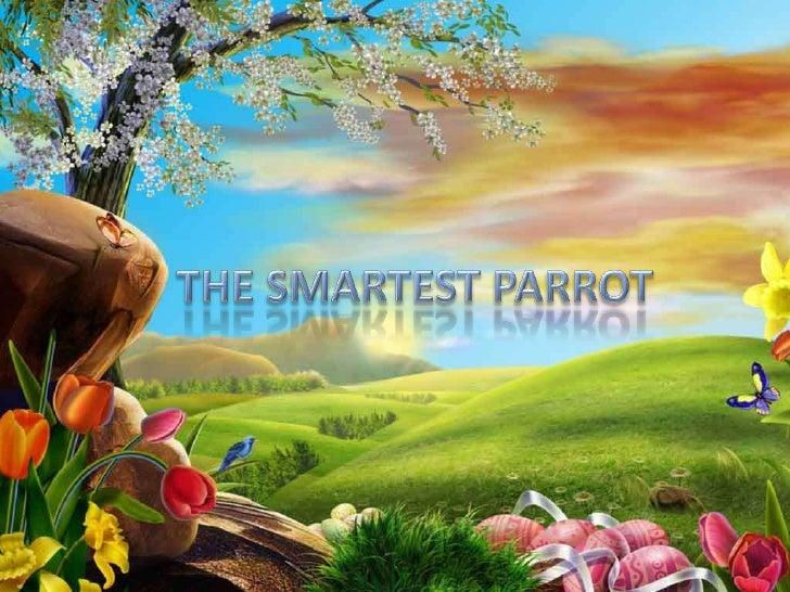 THE SMARTEST PARROT<br />