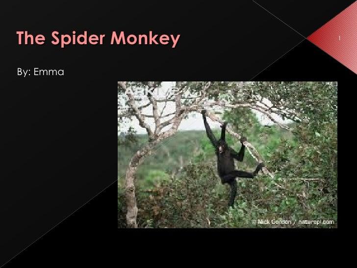 The Spider Monkey <ul><li>By: Emma  </li></ul>
