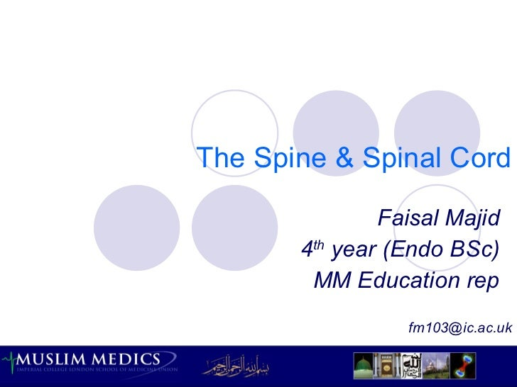 The Spine & Spinal Cord Faisal Majid 4 th  year (Endo BSc) MM Education rep [email_address]