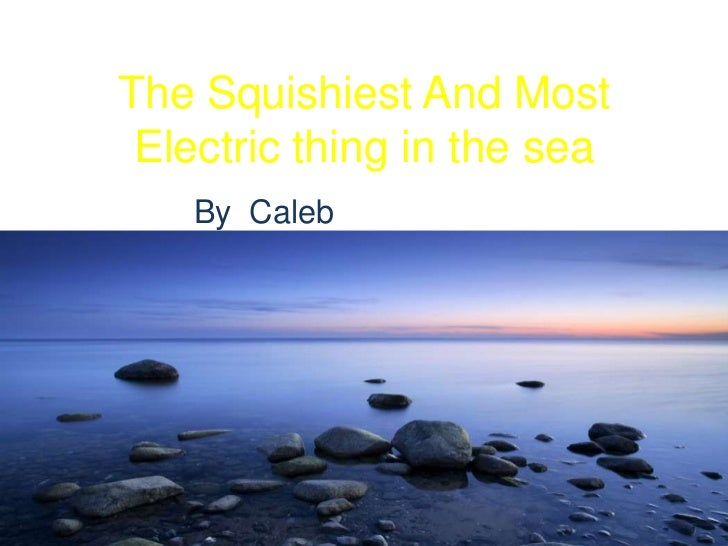 The squishiest and most electric thing in the sea