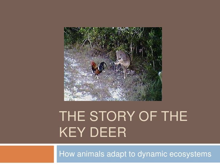 The Story of the Key Deer<br />How animals adapt to dynamic ecosystems<br />
