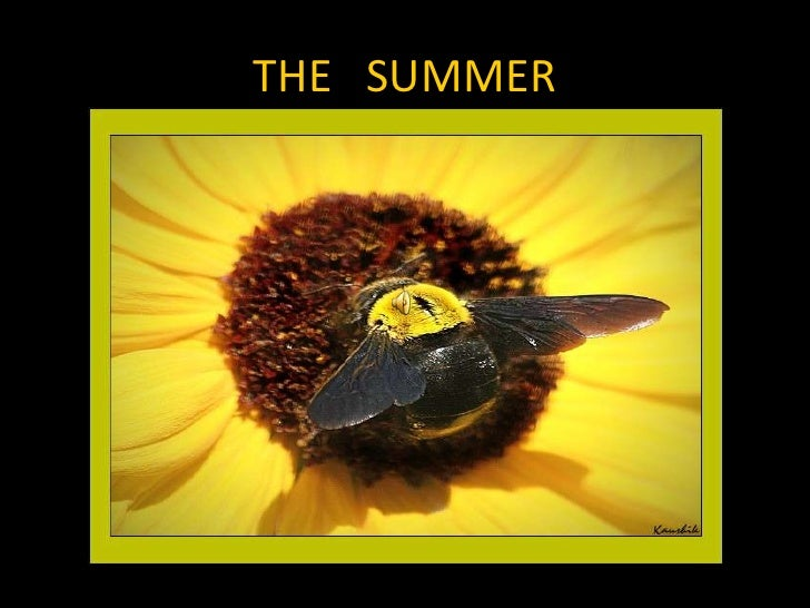 THE   SUMMER<br />