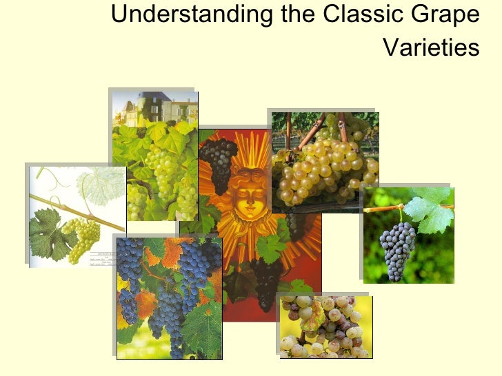 The Super Classic Grape Varieties (Week 3)