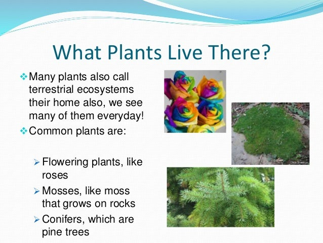 terrestrial plants with names