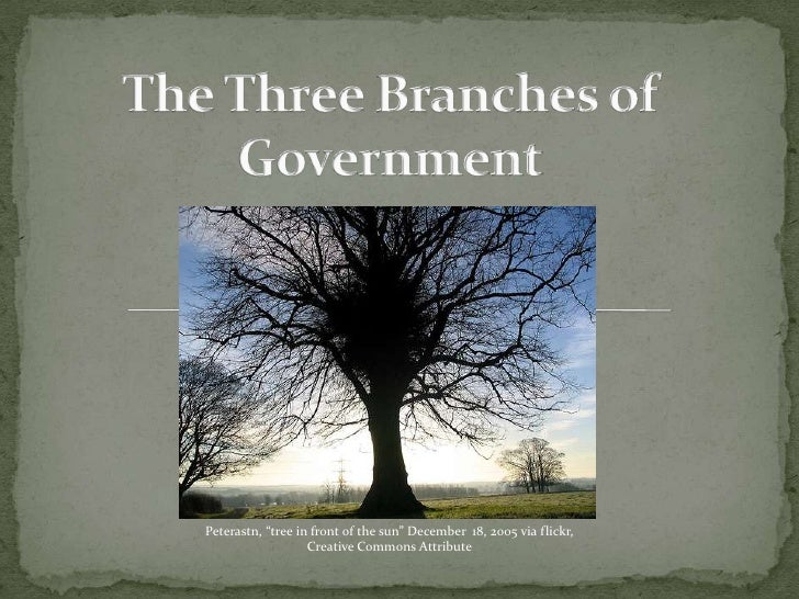"""The Three Branches of Government<br />Peterastn, """"tree in front of the sun"""" December  18, 2005 via flickr,  Creative Commo..."""